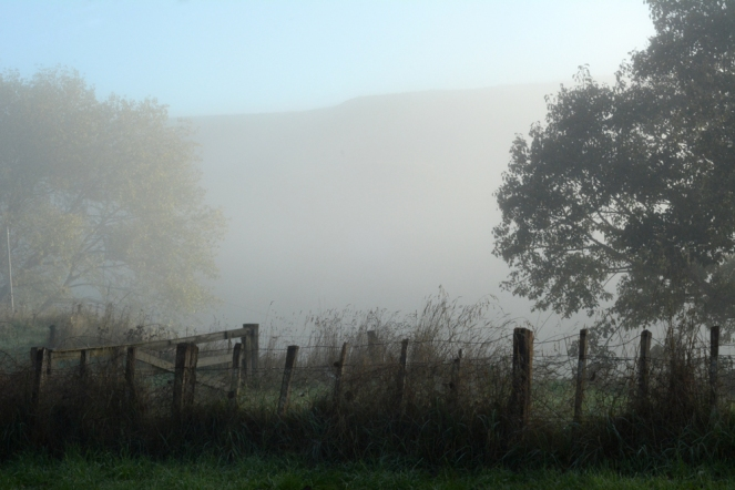 05252015_misty mornings
