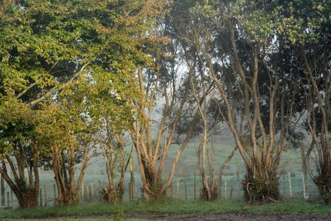 05252015_misty mornings003